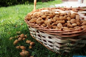 dry fruits list in india